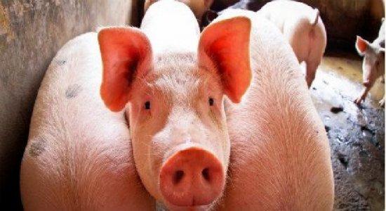 Guerra comercial pode favorecer importação de carne brasileira para a China