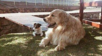 Os animais de estimação da família Temer: Picoly, à esquerda, e Thor
