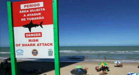 Banhista atacado por tubarão em Piedade também estava no raso; veja últimas notícias e estado de saúde atualizado da vítima