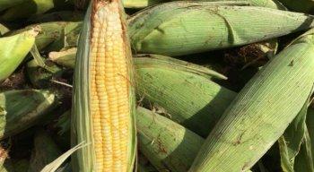 Venda de milho no Ceasa