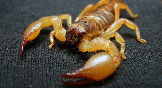 Morador relata infestação de escorpiões na Zona Oeste do Recife