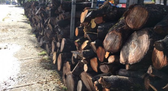 Comerciantes esperam grande movimento de procura por fogos e fogueiras