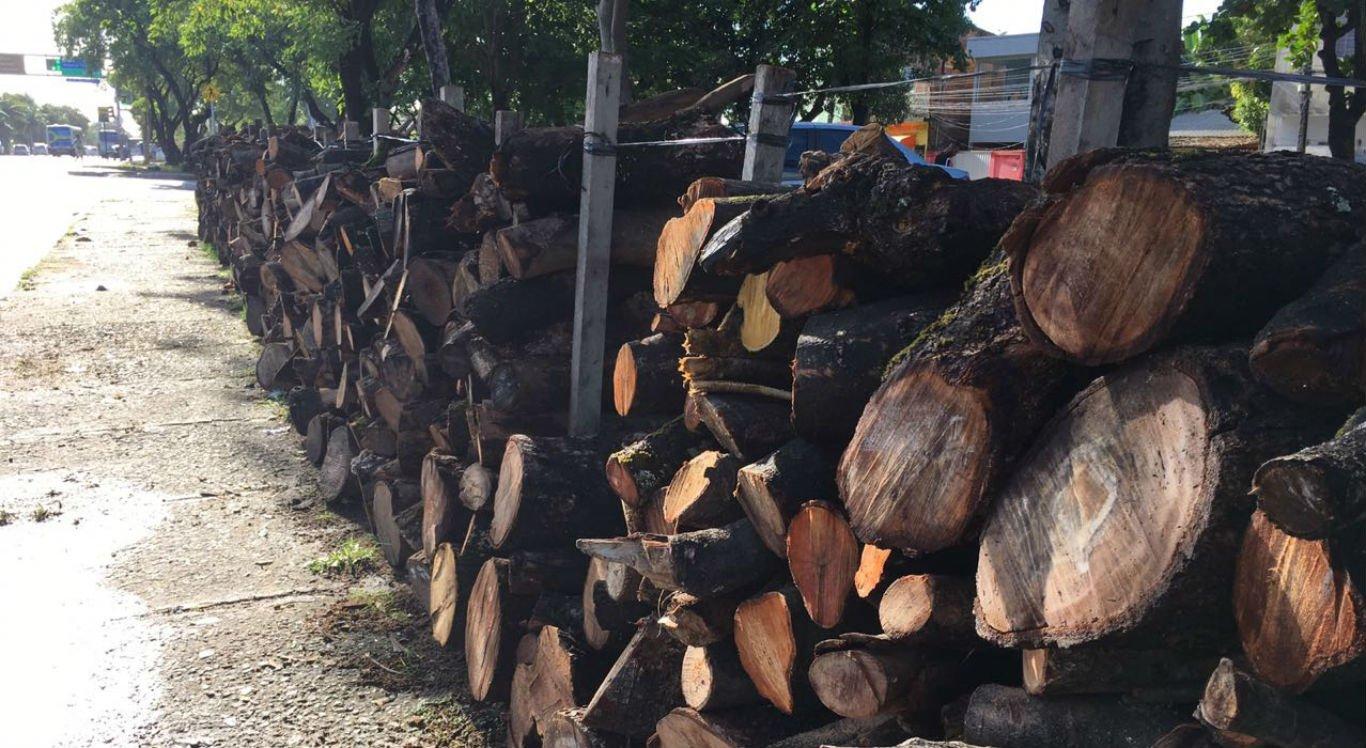 Venda de madeira para produção de fogueira é tradição