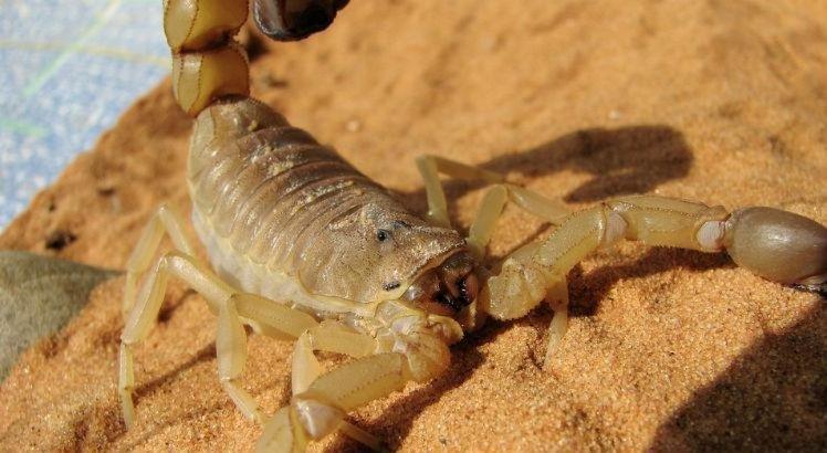 HR registra internamento de crianças picadas por escorpião