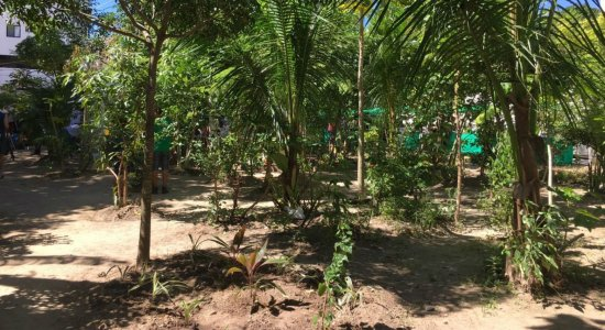 Horta comunitária de Casa Amarela completa 3 anos de inauguração