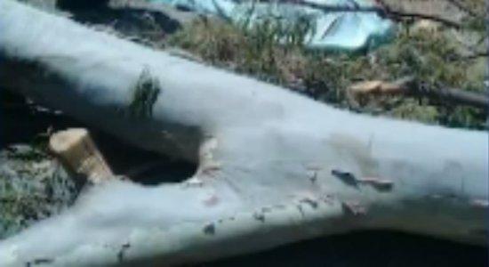 Podador morre após cair de árvore em Taquaritinga do Norte