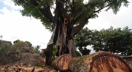 Vândalos ateiam fogo em árvore sagrada do Terreiro de Pai Adão
