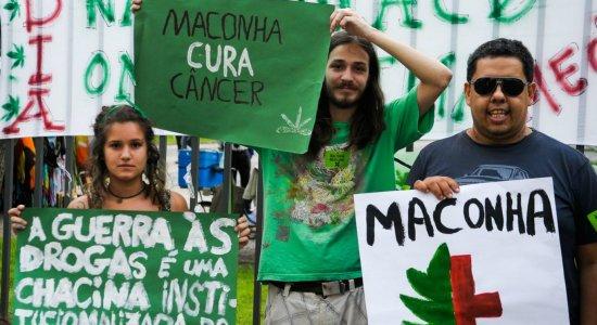 Senado avança em proposta que libera uso medicinal da maconha