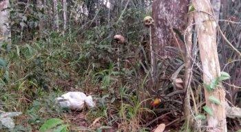 Crânios foram encontrados em sítio na zona rural de Camocim de São Félix