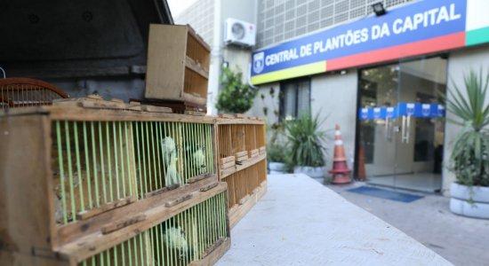 Dupla é detida comercializando aves silvestres na feira do Cordeiro