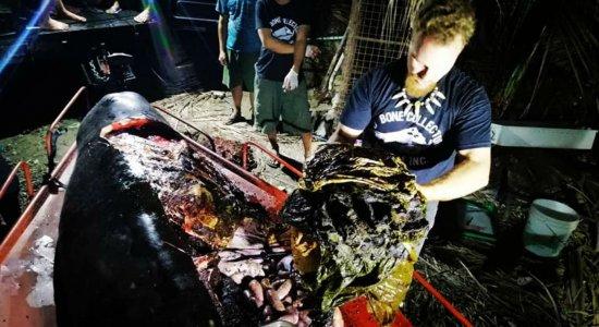 Grupo encontra baleia morta com 40 kg de plástico no estômago