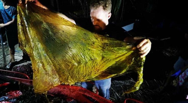 Biólogos encontraram plásticos de vários tipos no estômago do animal