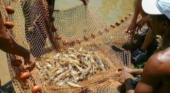 O Guia de Consumo Responsável de Pescado pesquisou 38 espécies de peixe de maior valor comercial, que são as mais procuradas pelos consumidores