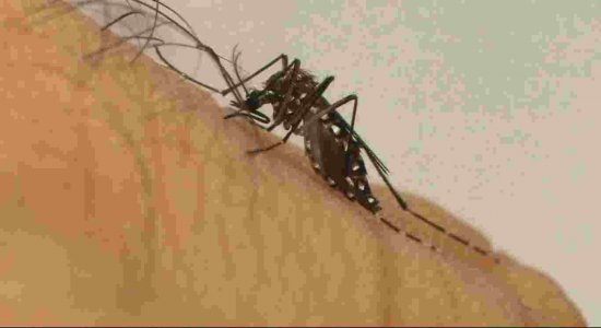 Conheça o vírus mayaro, primo da chikungunya