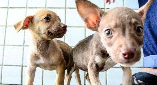 Evento de adoção de cães e gatos castrados acontece neste sábado