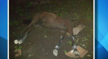 Égua levou choque ao encostar em poste