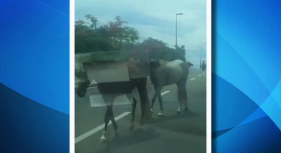 Vídeos: cavalos são flagrados soltos na Região Metropolitana do Recife