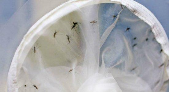Saiba como identificar os sintomas da chikungunya