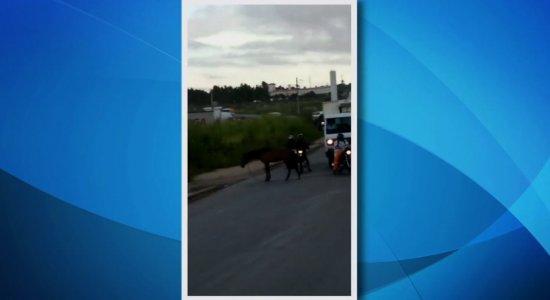 Vídeos: cavalos são flagrados em vias movimentadas do Grande Recife