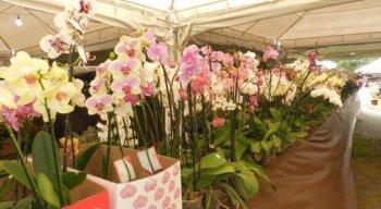 O 13º Festival das Flores segue simultaneamente nos Parques Santana e Dona Lindú até o domingo das mães