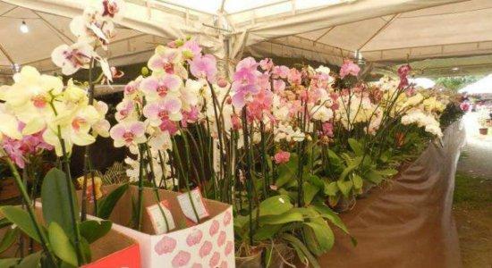 Festival das Flores segue até o Dia das Mães nos Parques Santana e Dona Lindu