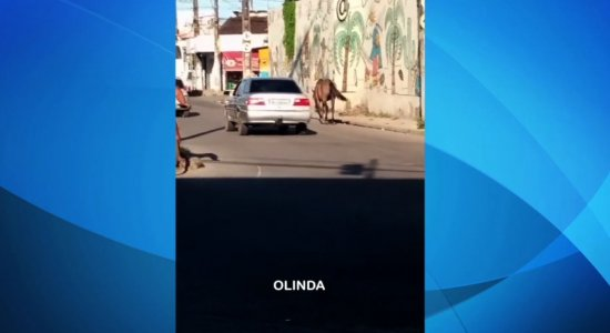 Vídeo: moradores flagram cavalos em vias movimentadas da RMR