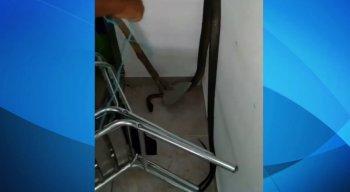O animal foi capturado pelos moradores locais e encaminhado para a brigada animal de Camaragibe
