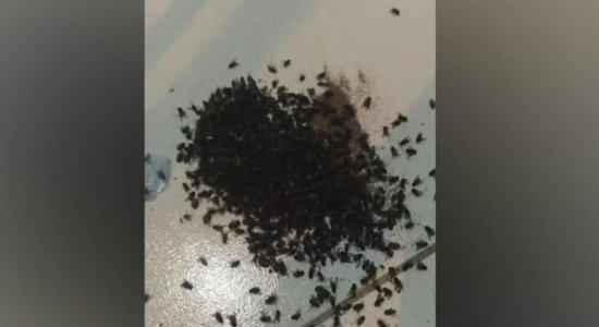 Crianças e idosos sofrem com infestação de moscas em Igarassu