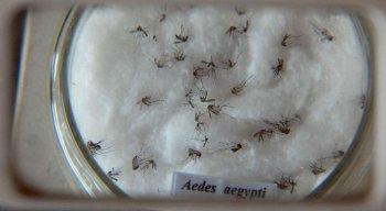 A vacina contra o vírus da chikungunya já está em testes em 24 voluntários