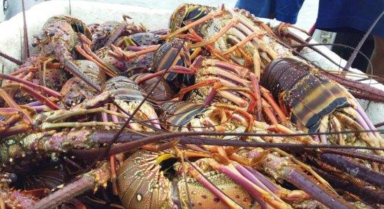 Pescadores são presos com 500 Kg de lagosta em Itamaracá