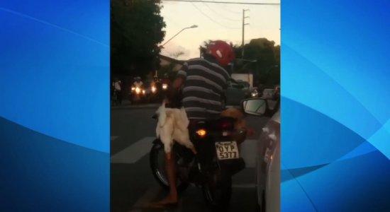 Vídeo: homem é flagrado transportando animais em motocicleta no Recife
