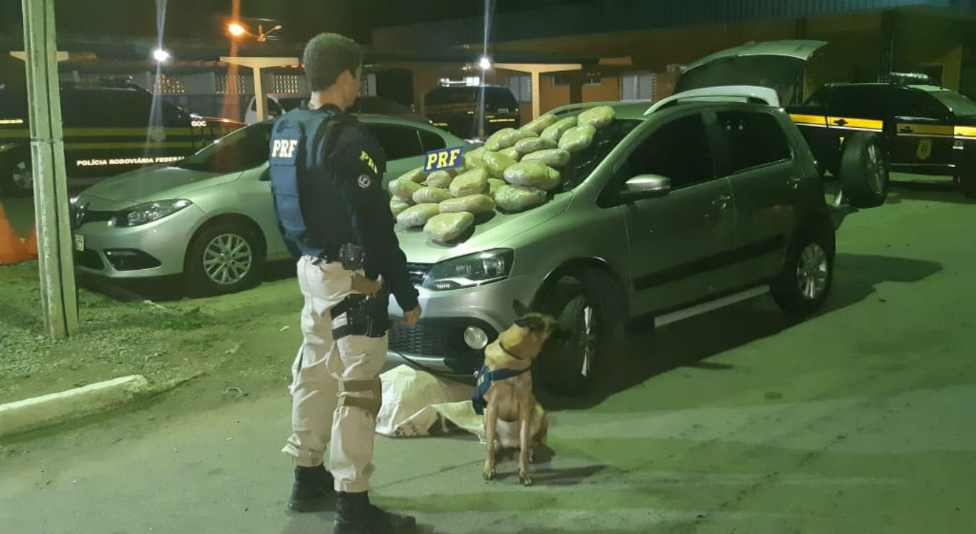 Cão farejador auxiliou PRF a localizar drogas dentro de porta-malas de carro
