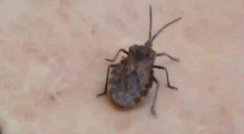 Chagas é uma doença tropical causada pelo parasita Trypanosoma cruzi