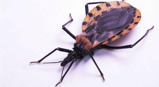 Surto de doença de Chagas em Pernambuco pode ser o maior do Brasil