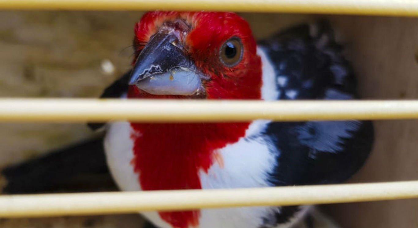 Criadores de animais silvestres que fizerem a entrega voluntária não serão punidos