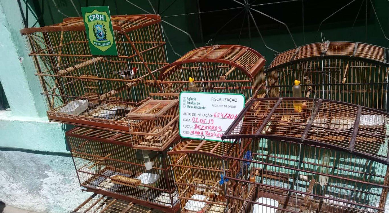 Pássaros foram apreendidos durante operação Voo Livre, em Bezerros