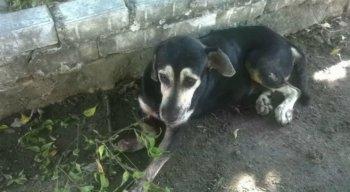 O cachorro foi socorrido e encaminhado para o Hospital Veterinário do recife