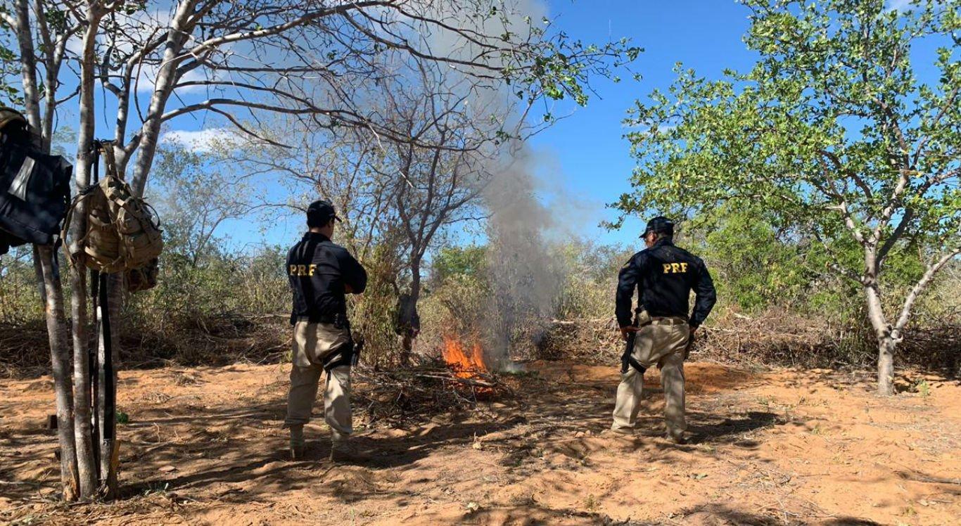 Maconha foi incinerada pela Polícia Rodoviária Federal