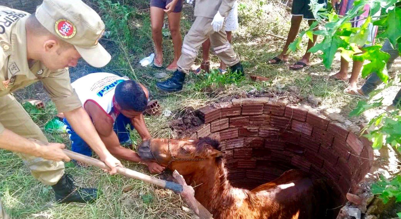 Cavalo foi resgatado de dentro de cacimba em Carpina