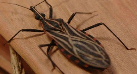 Doença de Chagas: o que é, causas, sintomas, tratamento e prevenção