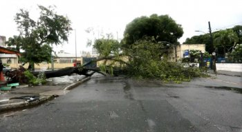 A árvore interditou a Rua do Pombal