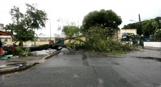 Árvore cai e interdita faixa de rua em Santo Amaro