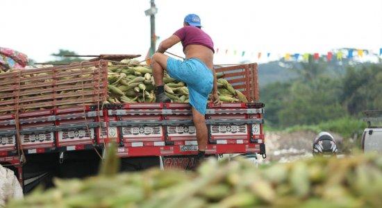 São João: Ceasa segue com vendas de milho no Recife