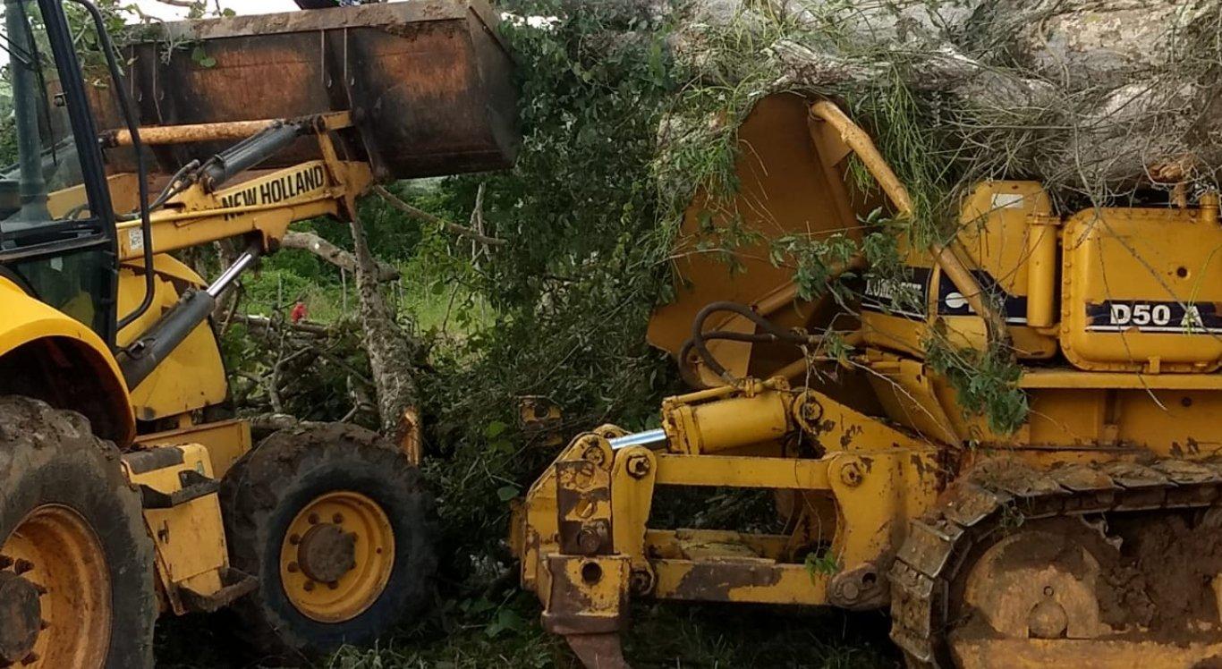 Foram necessárias duas retroescavadeiras e uma motoserra para retirar a árvore