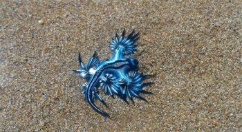Dragão Azul foi visto na orla de Piedade, em Jaboatão dos Guararapes