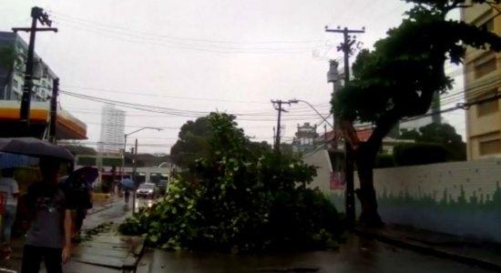 Chuva: Árvore cai e bloqueia rua na Boa Vista