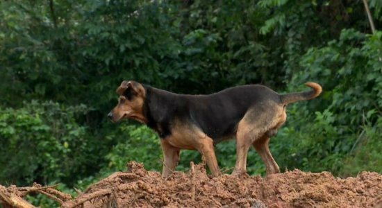 Abreu e Lima: Cachorro de família morta em deslizamento anda sem rumo