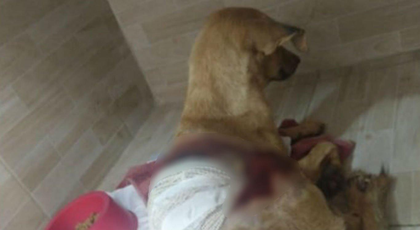 Cadela Vitória está recebendo tratamento em clínica veterinária particular