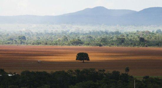 Bolsonaro diz que novos dados sobre desmatamento podem sair hoje