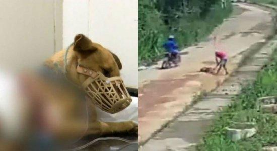 Dentro de 3 dias, dois casos de violência brutal contra cachorros são registrados